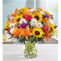 Boston_Sunshine_Blooms_Bouquet161767lz